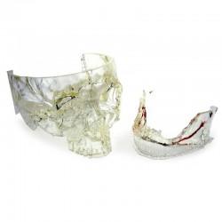DWS XFAB 2500PD Dentaire impression imagerie médicale